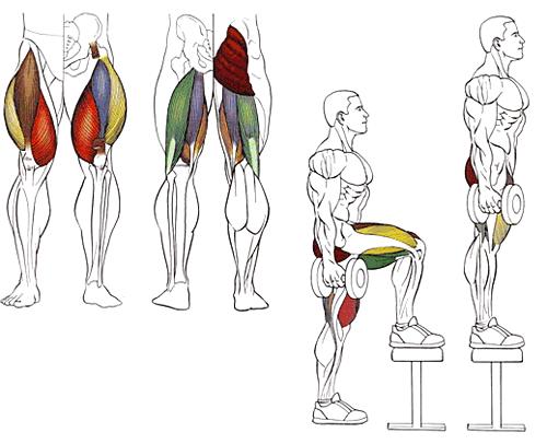 Как тренировать ноги в домашних условиях